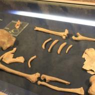 die 16 Knochen eines Neanderthales wurden 1856 in einer Höhle im Neanderthal gefunden (01.05.2016)
